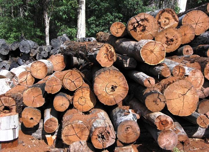 מחסן עצים גרוס